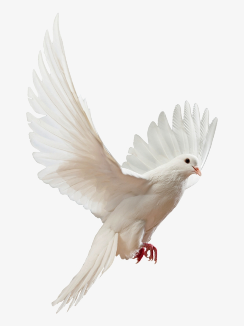Flying Doves Png Picture Freeuse Download Flying White Dove Png Png Image Transparent Png Free Download On Seekpng Dove png free vector we have about (61,118 files) free vector in ai, eps, cdr, svg vector illustration graphic art design format. flying doves png picture freeuse