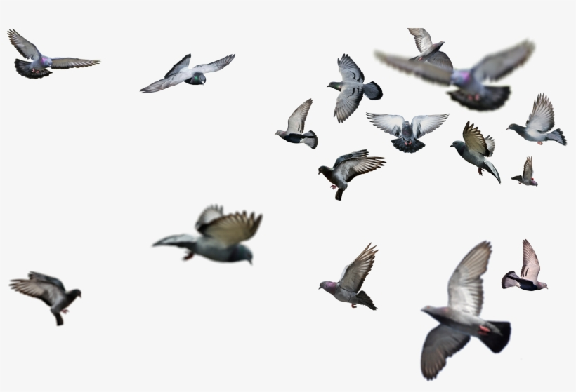 Flying Bird Png Birds Flying Png Png Image Transparent Png Free Download On Seekpng