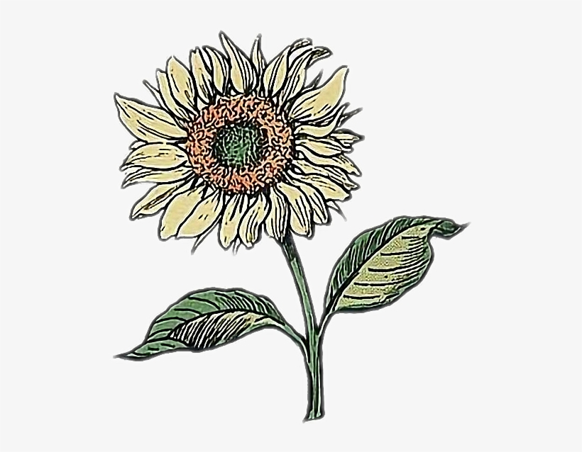 Sunflower Drawing Doodle Flower Aesthetic Drawing Png Image