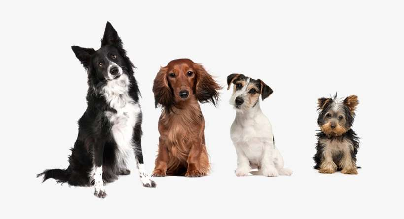 Pets At Home World S Cutest Puppies In 3 D Book Png Image Transparent Png Free Download On Seekpng