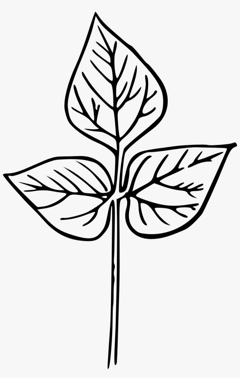 Drawn Leaf Hand Drawn - Hand Drawn Plant Png PNG Image ...