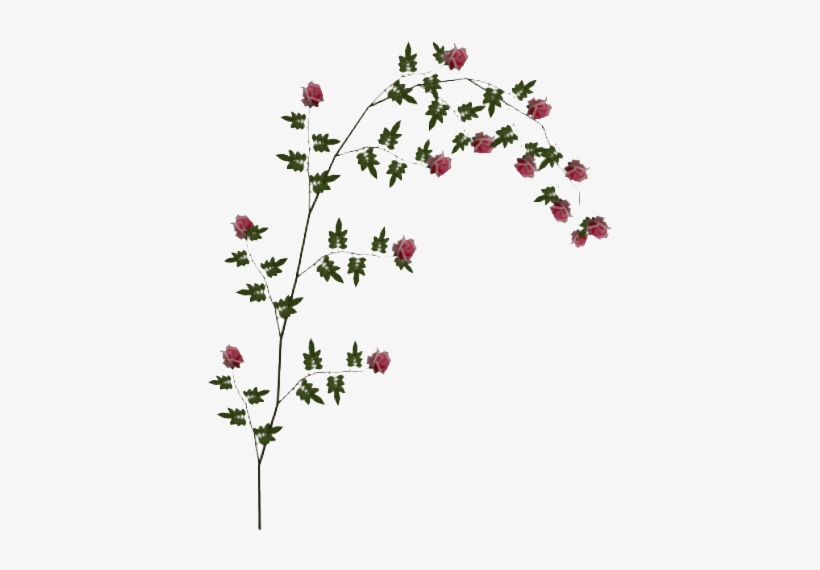 Rose Hd Transparent Images - Flower Vines Transparent Background@seekpng.com
