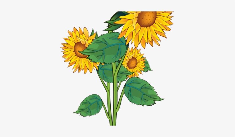 Sunflower Border Clip Art Clipart Sun Flowers Clip Art Png Image Transparent Png Free Download On Seekpng