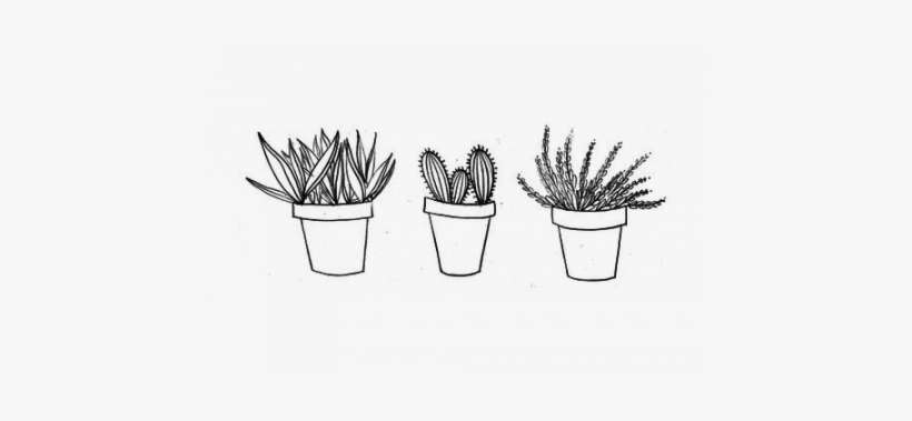 Cactus Drawing Yellow Tumblr Background Aesthetic Png Image