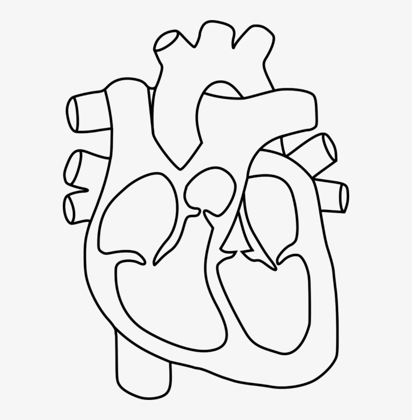 Human Heart Clipart Group Banner Black And White Download