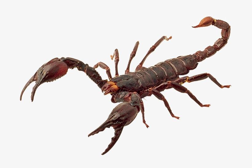 долго прозрачные картинки скорпион даже осадочных