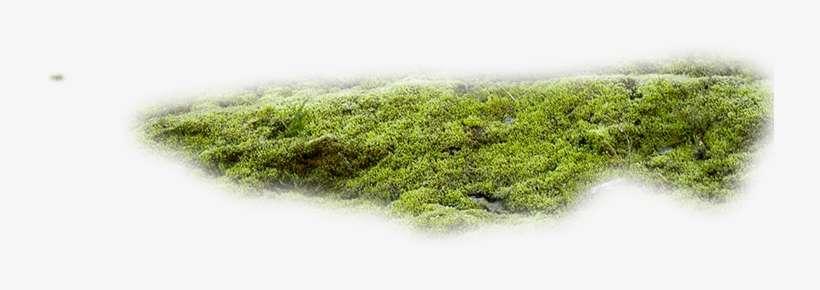 Moss Texture Png - Moss Png@seekpng.com
