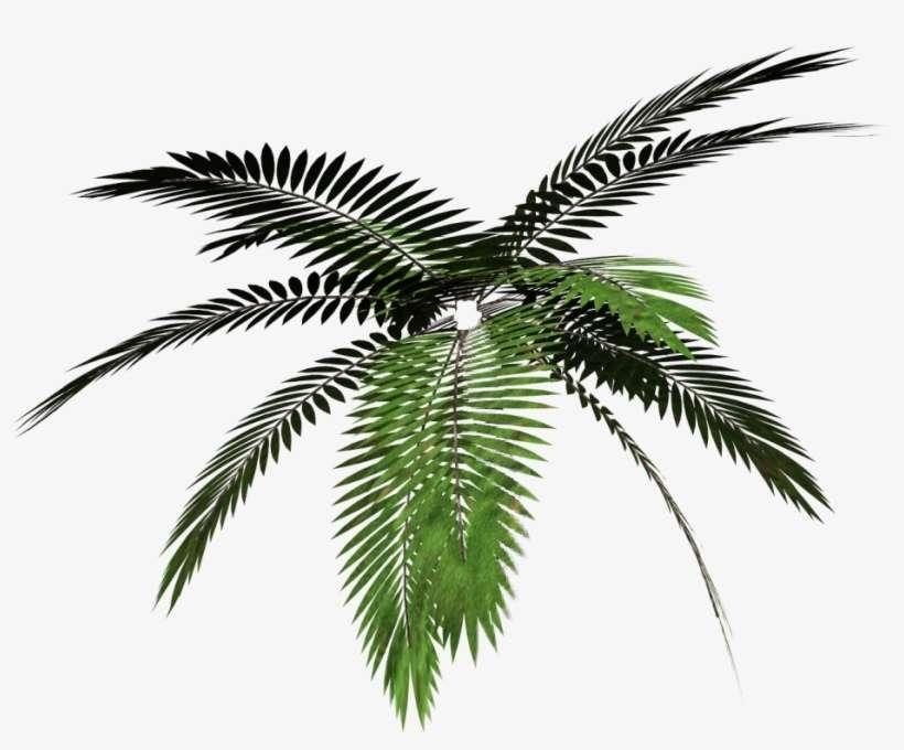 Report Abuse Palm Tree Png Vaporwave Png Image Transparent Png Free Download On Seekpng