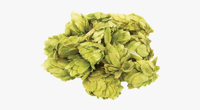 Whole Hops For Dry Hopping - Morebeer! Northern Brewer Whole