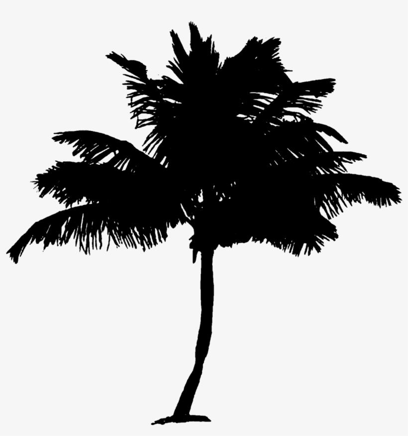 Palm Tree Coconut Palm Tree Tree Tropical Climate Tropical Gambar