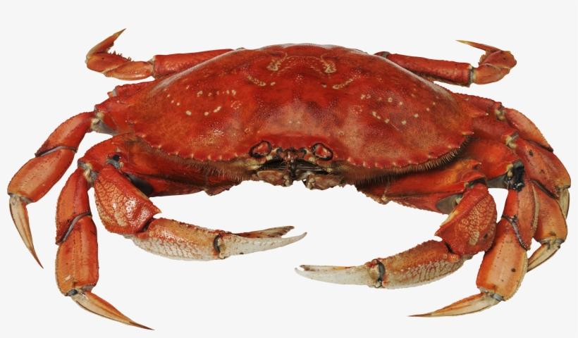 Crab Clipart Png , Transparent Cartoon, Free Cliparts ...   480x820