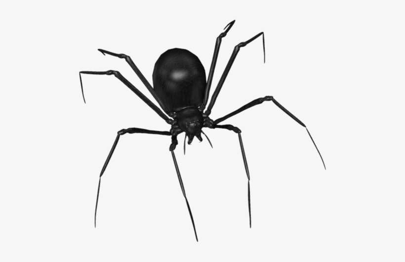 Scary Spider Black Widow Over Black Surface Drawing - Araignées Halloween PNG Image | Transparent PNG Free Download on SeekPNG