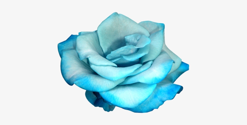 177 Images About Flower Png On We Heart It Fleur Bleu Fond Blanc