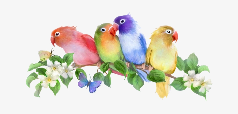 Fotki For The Birds Bird Pictures Art Flowers Chant Good Morning My Familys Png Image Transparent Png Free Download On Seekpng