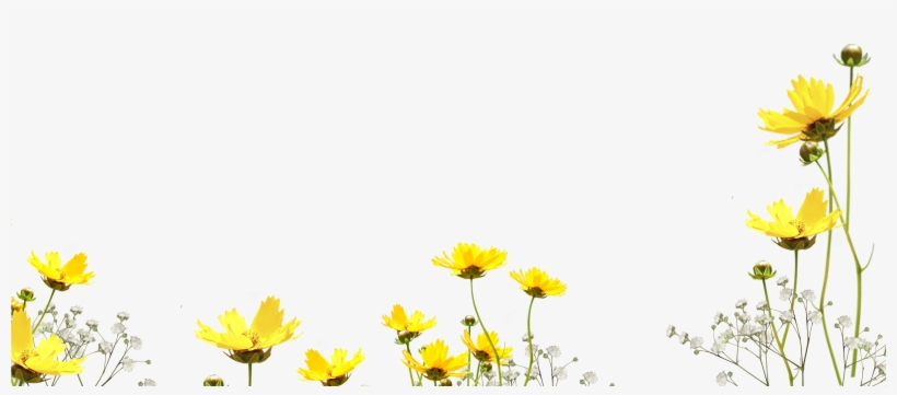 Free Flower Photo Overlay, Photoshop Overlays From - Flower