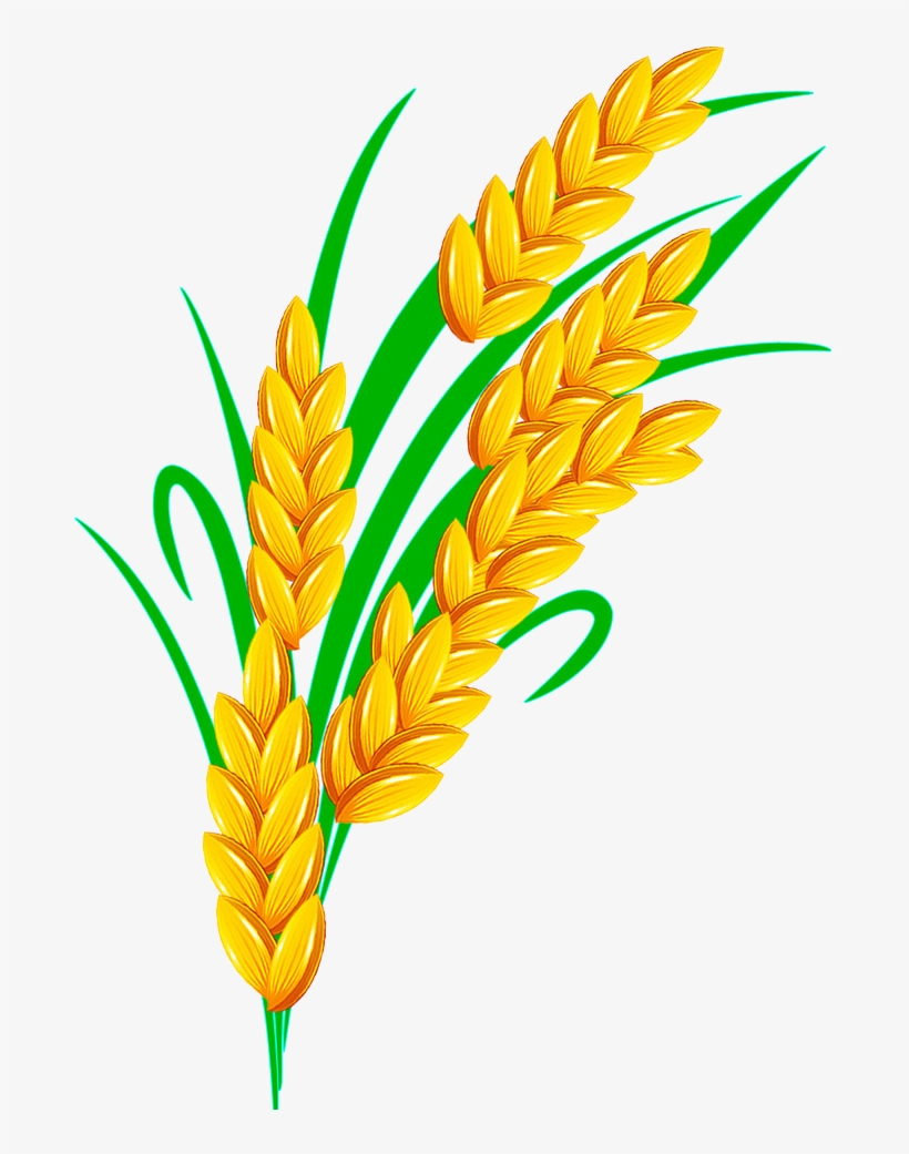 Rice Euclidean Vector - Rice Plant Vector Png@seekpng.com