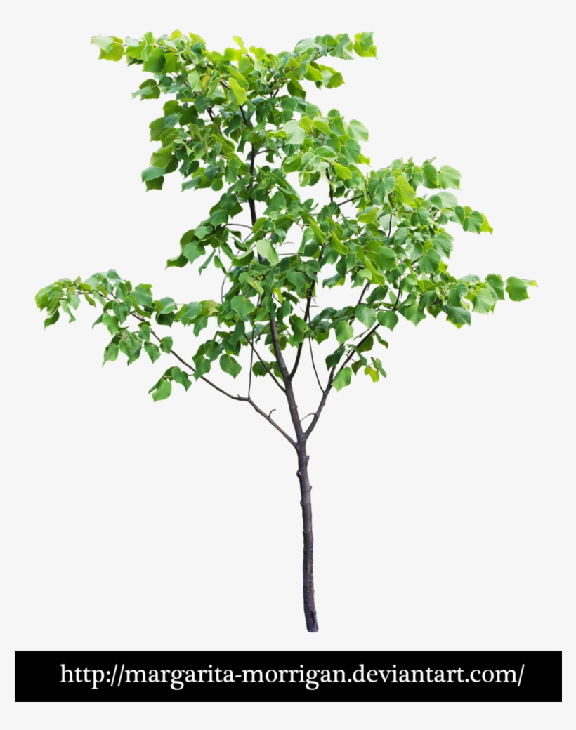 Small Trees Png - Tree Front View Png PNG Image