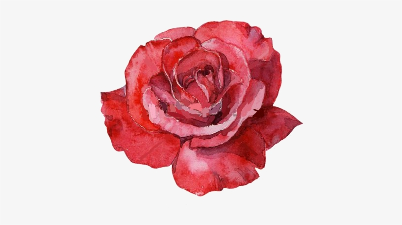Red Rose Watercolor Rose Water Color Png Image Transparent Png