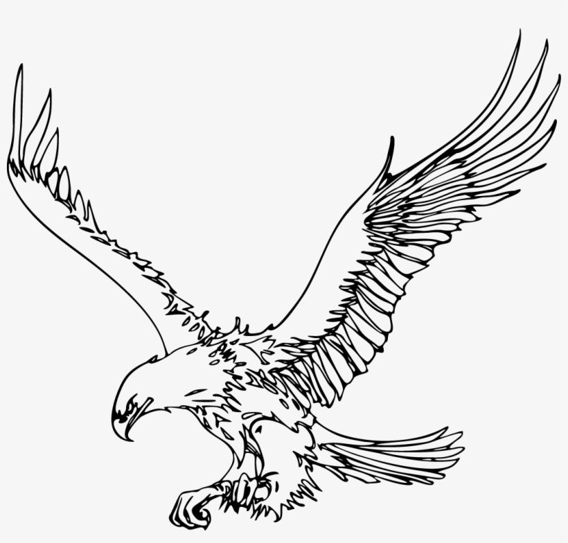 Bald Eagle Outline Pgn Transparent Background