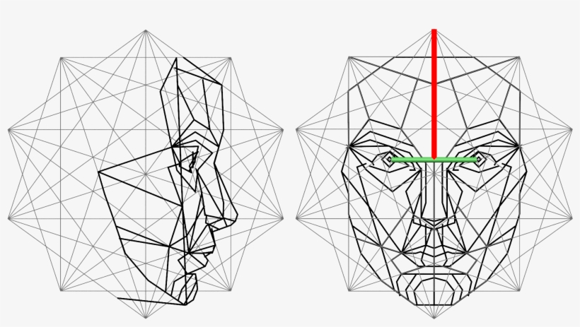 The Golden Ratio In 3d Human Face Modeling - Golden Ratio
