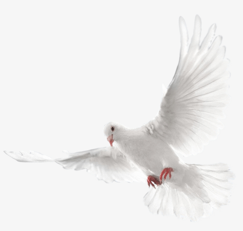 Pigeons Hd Transparent Images - Eid Mubarak Cb Editing