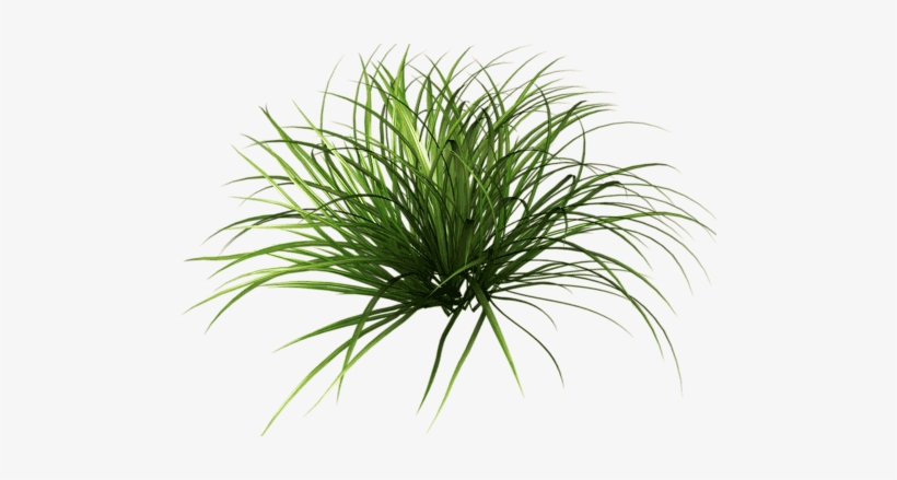 Grass Blade Texture Png Download Plantas Para Photoshop Png Png