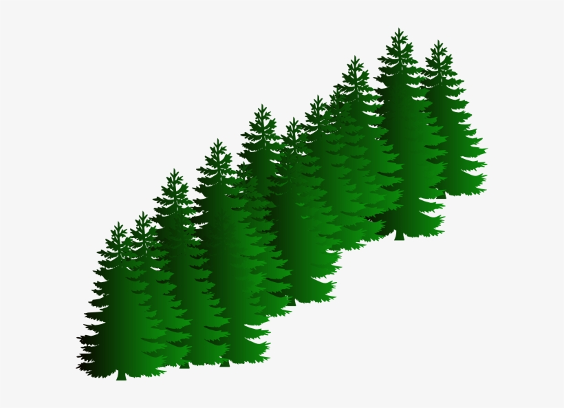 Watercolor Pine Tree Clipart Evergreen Tree Clipart Png Png Image