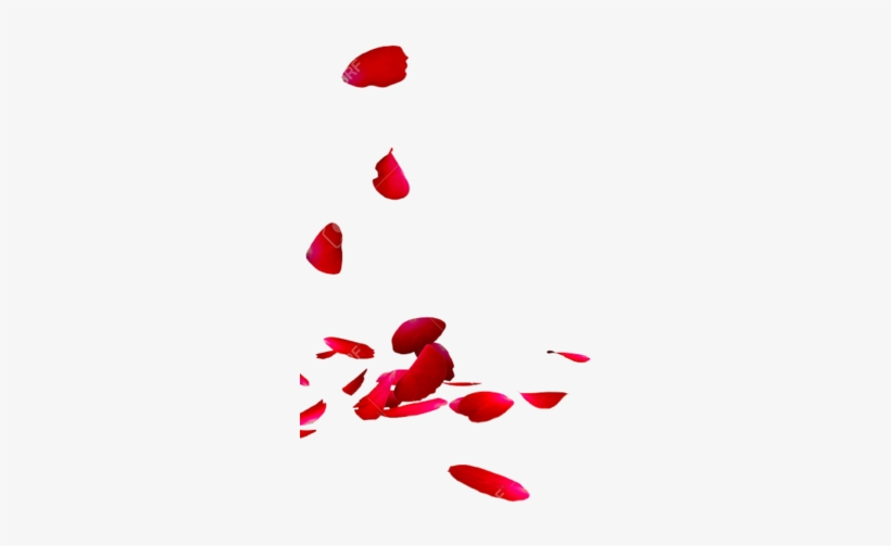 Share This Image - Rose Petals Png Transparent@seekpng.com