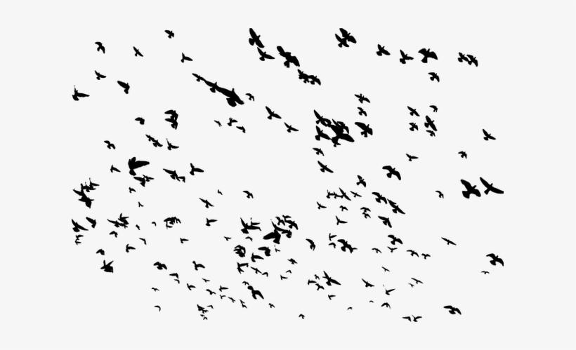 Flying Bird Png Image - Flock Of Birds Png PNG Image | Transparent
