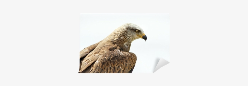 Red-tailed Hawk PNG Image | Transparent PNG Free Download on SeekPNG