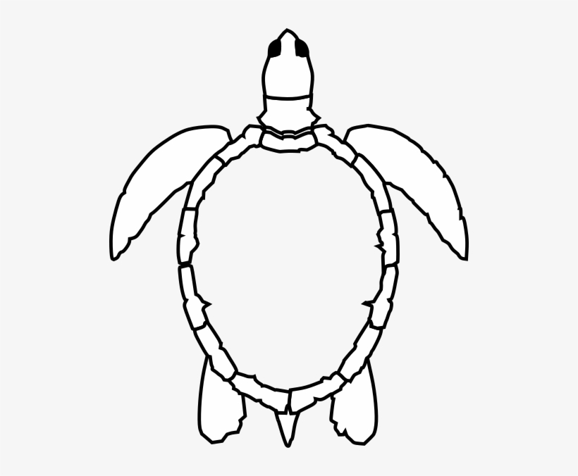 Sea Turtle Outline Png Image Transparent Png Free Download On Seekpng Learning how to draw a turtle is very simple! sea turtle outline png image
