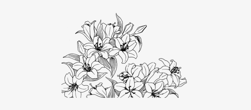 Pinterest Flowers Drawing Tumblr Png Png Image Transparent Png