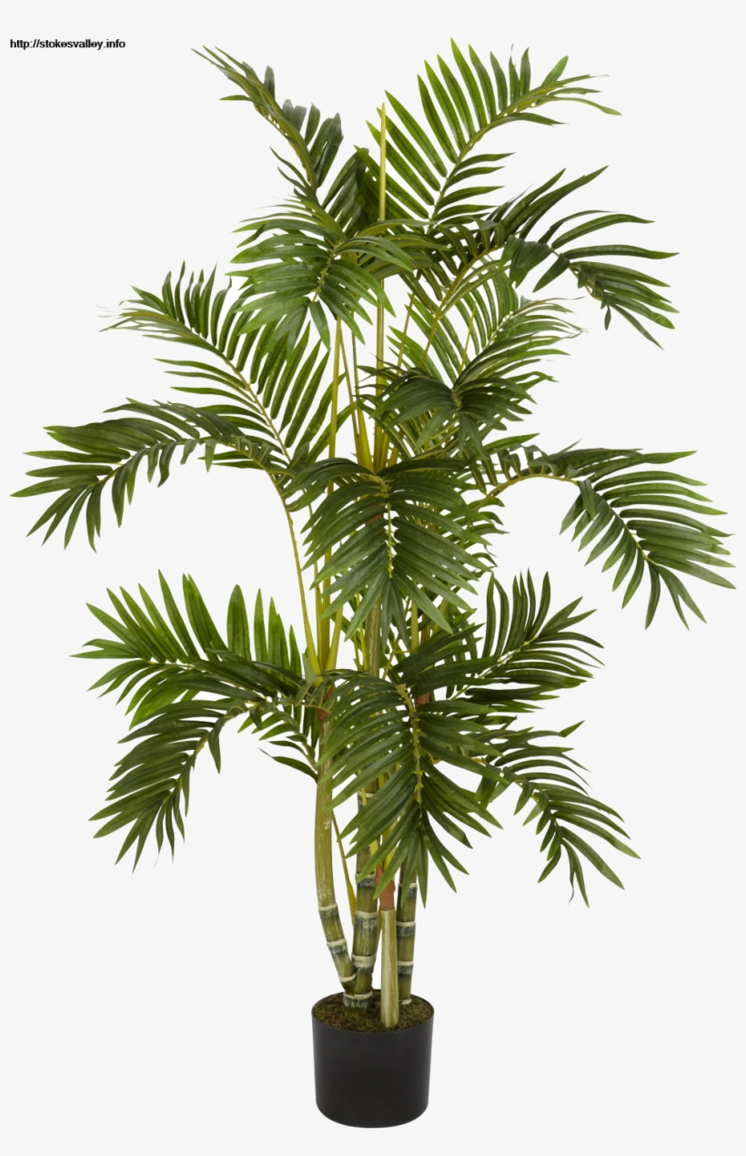 Plants Png Transparent Free Images Png Only Best Large