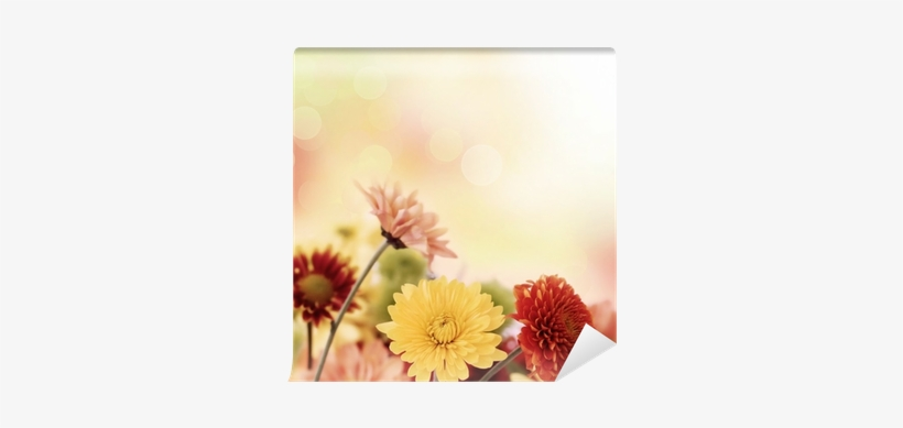 Colorful Mums Flowers On Warm Bokeh Background Wall - Bokeh PNG