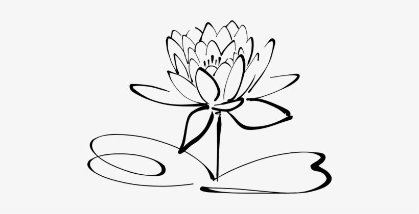 Lotus Flower Line Art Blossom Bloom Petal Lotus Flowers Clipart