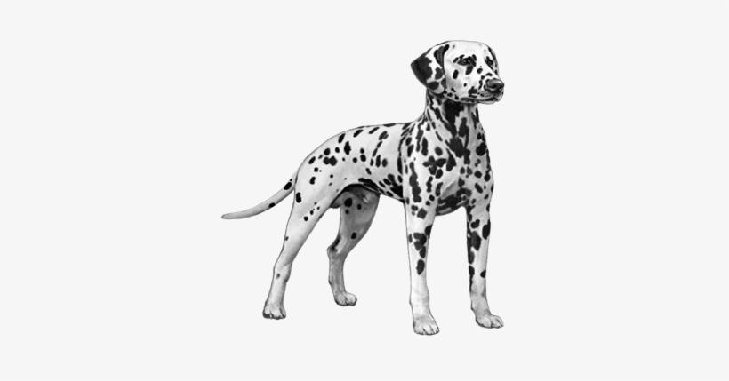 Ear Muzzle Tail Dalmatian Dog Counted Cross Stitch Pattern Png