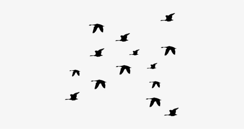 Flying Bird Png Image - Black Bird Flying Away PNG Image