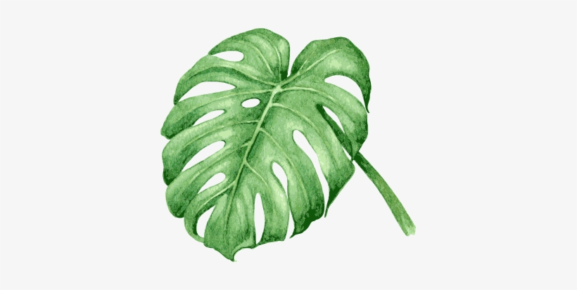 On Arrival Tropical Leaves Vector Watercolour Png Image Transparent Png Free Download On Seekpng 4517 x 6000 png 9075 кб. tropical leaves vector watercolour png