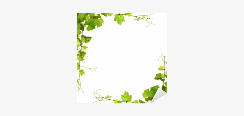 Bunch Of Green Vine Leaves And Grapes Vine Sticker Wine Leaves Background Png Image Transparent Png Free Download On Seekpng