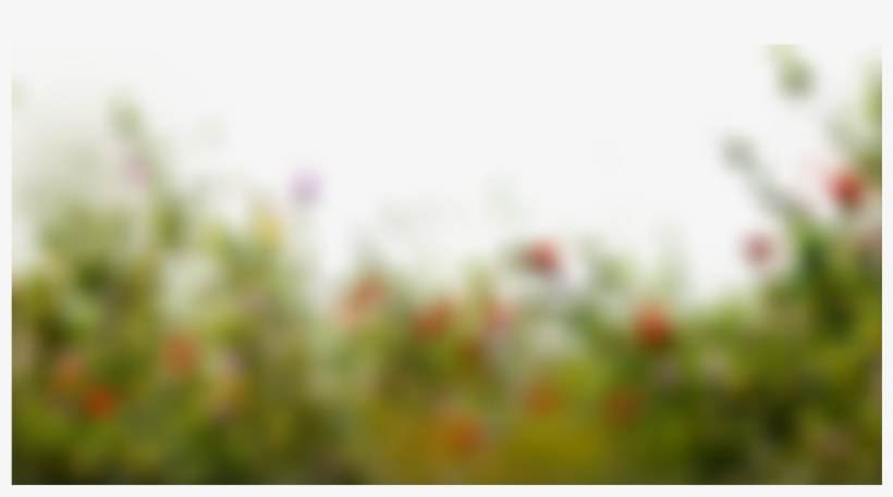 Bokeh Background By Learningwithsr - Transparent Background Picsart
