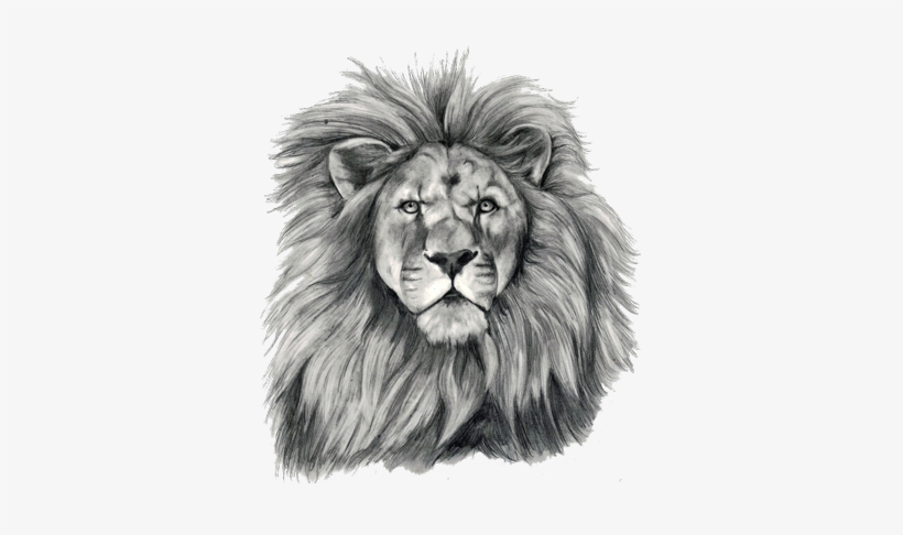 Lion Tattoo Png Transparent Free Images Lion Face Tattoo Sketch