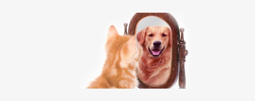 Banner Dog Cat Self Esteem Png Image Transparent Png Free Download On Seekpng