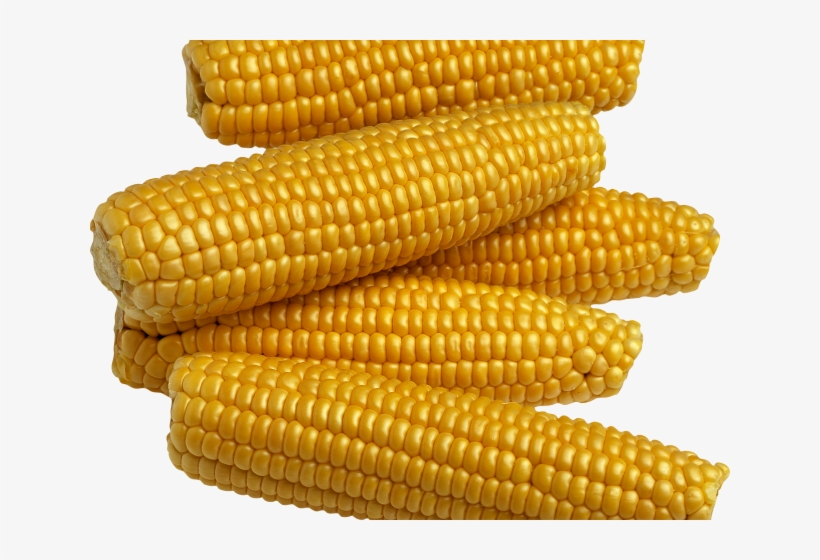 Corn Clipart Corn Seed - Food Crops In Nigeria PNG Image | Transparent PNG  Free Download on SeekPNG