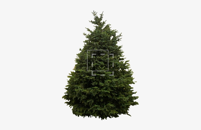 Bare Christmas Tree Clipart.Source Www Wpclipart Com Bare Christmas Tree Png Png