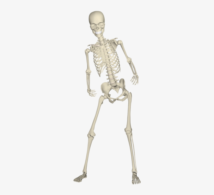 Illustrations - Skeleton Leg Png@seekpng.com