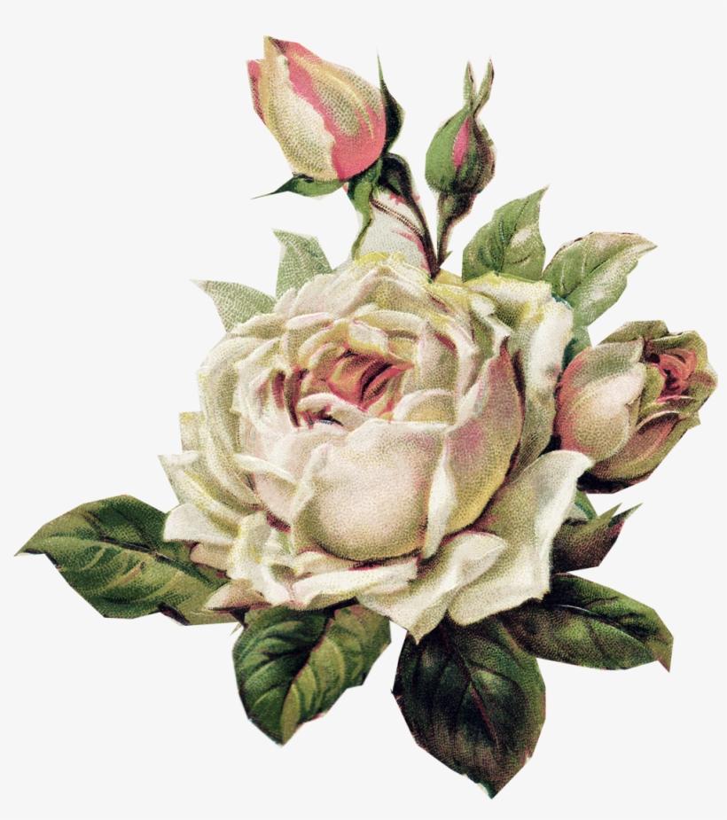 Pale Pink Rose Vintage Paper Vintage Floral Vintage White