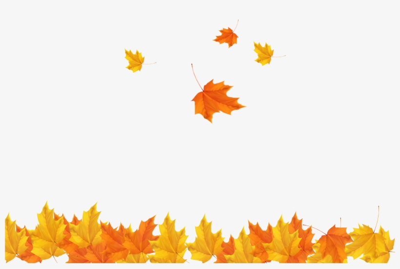Freeuse Download Autumn Leaves Background Clipart - Transparent Background Autumn Leaves Png@seekpng.com