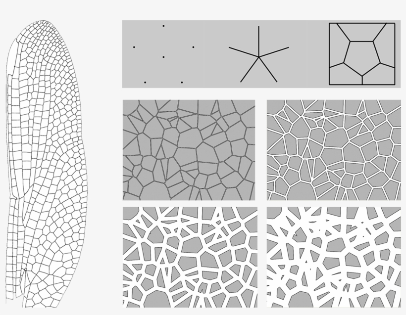 Voronoi Diagram In Dragonfly Wing Pattern Dragonfly Wing