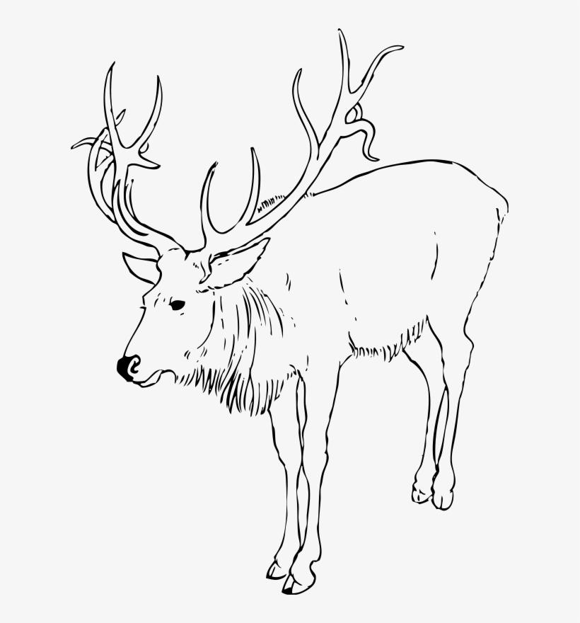 Deer With Horns Moose Clip Art