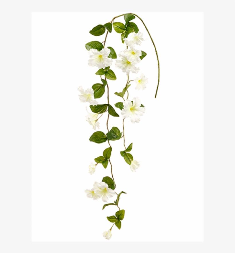 51 Petunia Hanging Spray White White Hanging Flowers Png Png